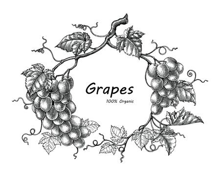 Grapes frame hand drawing vintage engraving illustration