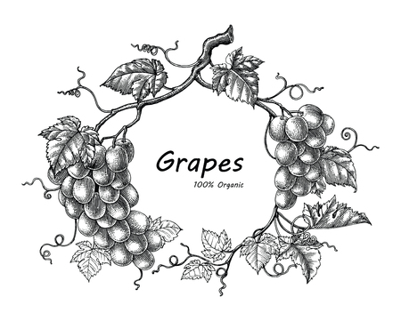 Grapes frame hand drawing vintage engraving illustration