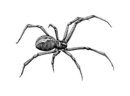 Black widow spider hand drawing