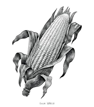 Mano di mais disegno illustrazione incisione d'epoca