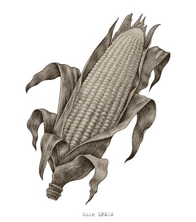 Corn hand drawing vintage engraving illustration Stock Illustratie