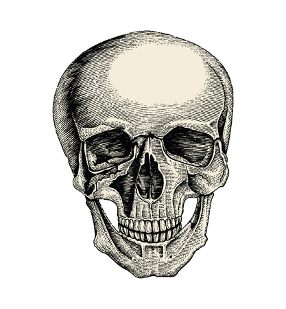 Human skull hand drawing vintage style,Anatomy of skull