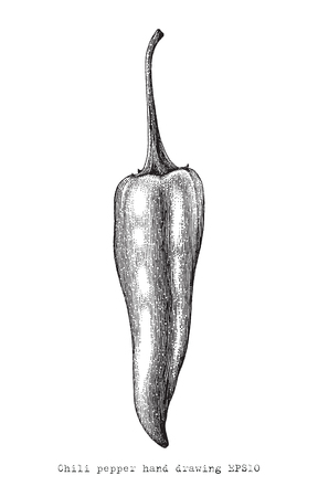 Chili peper hand drawing engraving style,Chili peper vintage clip art