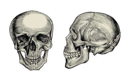 Anatomy skull hand drawing vintage,Lateral and front view of human skull Standard-Bild - 121826728