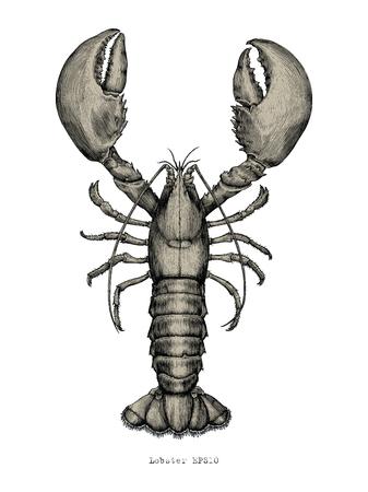 Main de homard dessin illustration de gravure vintage