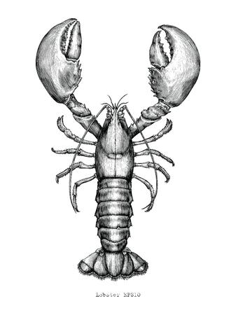 Ilustración de grabado vintage de dibujo a mano de langosta Ilustración de vector