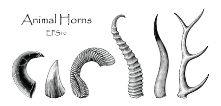 Animal horns vector set hand drawing vintage engraving illustration