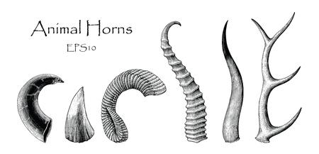 Conjunto de vectores de cuernos de animales dibujo a mano vintage grabado ilustración