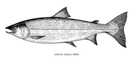 Estilo de grabado de dibujo a mano de salmón atlántico