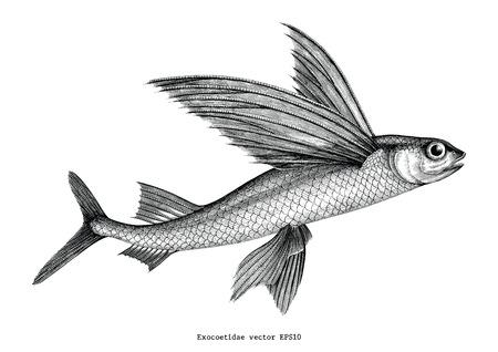 Exocoetidae ou poisson volant main dessin illustration de gravure vintage