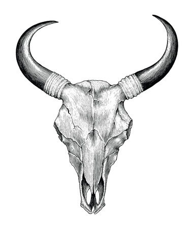 Skull cow hand drawing vintage engraving illustration