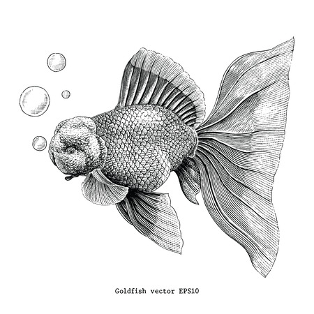 Goldfish hand drawing vintage engraving illustration