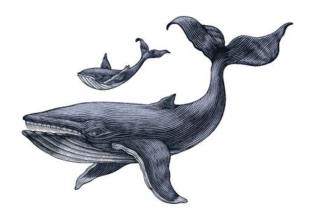 Gran ballena y ballena pequeña dibujo a mano ilustración de grabado vintage