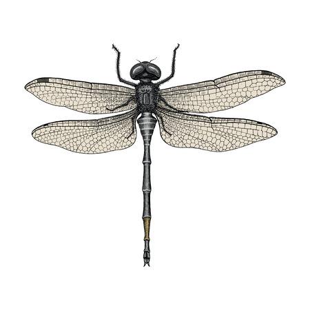 Dragonfly hand tekenen vintage gravure illustratie