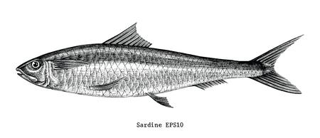Illustrazione d'annata dell'incisione del disegno della mano del pesce della sardina