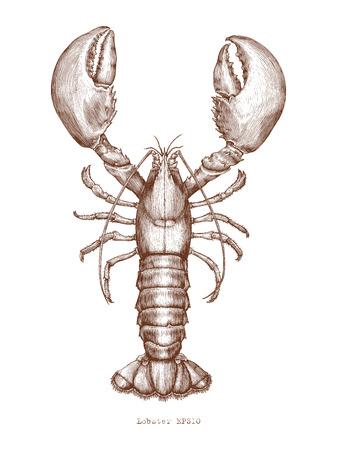 Lobster hand drawing vintage engraving illustration