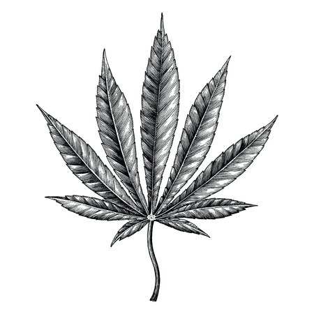 Cannabis leaf hand draw vintage clip art isolated on white background Иллюстрация