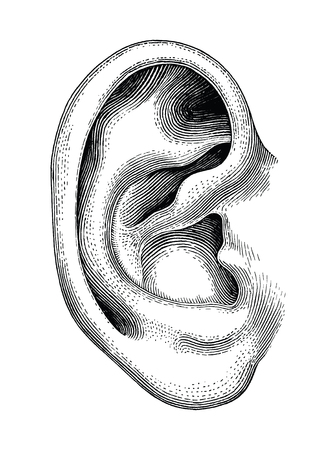 Human ear hand draw vintage clip art isolated on white background Vectores