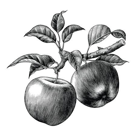 Mano de rama de manzana dibujar imágenes prediseñadas vintage aislado sobre fondo blanco.