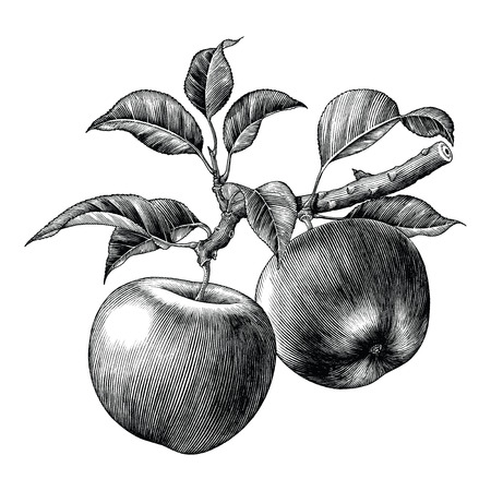 Apple branch hand draw vintage clip art isolated on white background Illustration