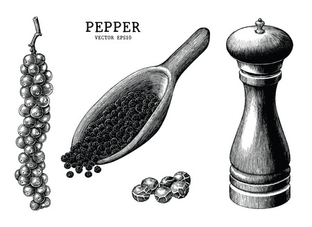 Pepper collection hand draw vintage clip art isolated on white background Illustration