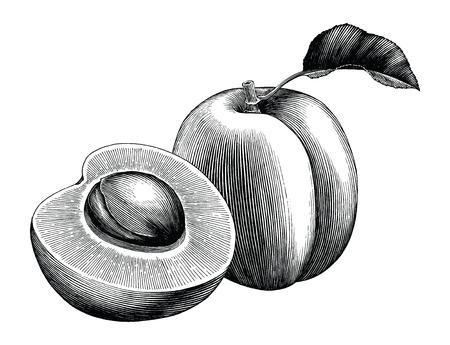 Aprikosensammlung Hand zeichnen Vintage ClipArt isoliert auf weißem Hintergrund