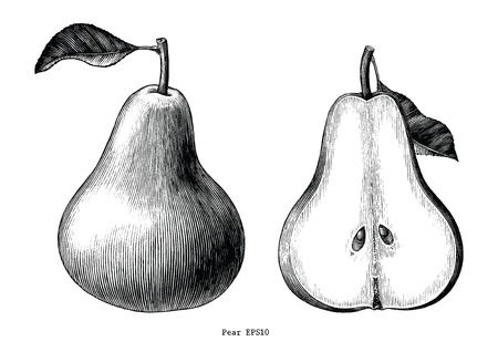 Owoce gruszki ręcznie rysować vintage clipart na białym tle