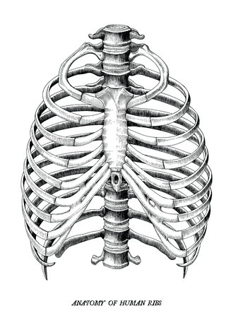 Anatomy of human ribs hand draw vintage clip art isolated on white background Illustration
