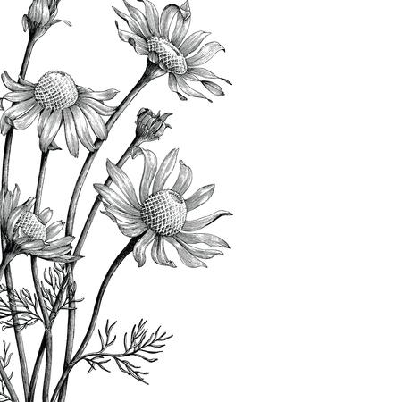 Flores de manzanilla mano dibujar portada de libro vintage