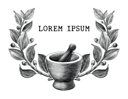 Mortar and pestle with herbs frame vintage engraving illustration isolated on white background,Logo of pharmacy and medicine Standard-Bild - 116950489