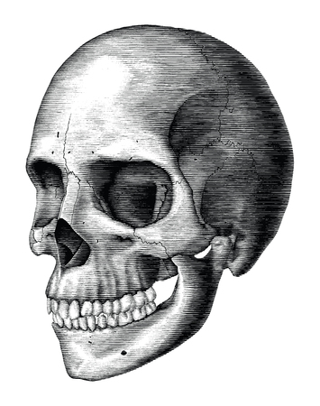 Antique of Human skull vintage engraving illustration isolated on white background Standard-Bild - 118470629