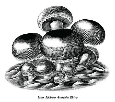 Antique engraving illustration of Button Mushroom hand draw black and white clip art isolated on white background Illustration