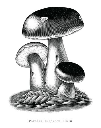 Antique engraving illustration of Porcini mushroom hand draw clip art isolated on white background