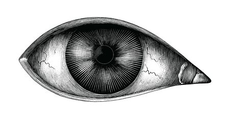 Anatomy of human eye hand draw vintage clip art isolated on white background