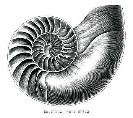 Antique engraving illustration of Nautilus shell hand draw black and white clip art isolated on white background