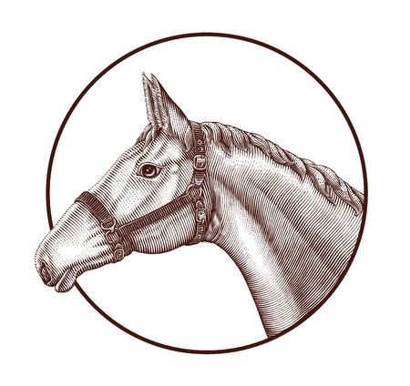 Logo of horse head in circle hand draw vintage engraving style isolated on white background, Horse farm concept