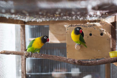 lovebirds birds on a branch