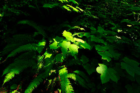 a picture of an exterior Pacific Northwest forest Reklamní fotografie