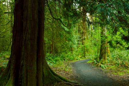 a picture of an exterior Pacific Northwest forest trail Reklamní fotografie