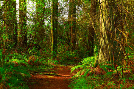 a picture of an exteior Pacific Northwest forest trail