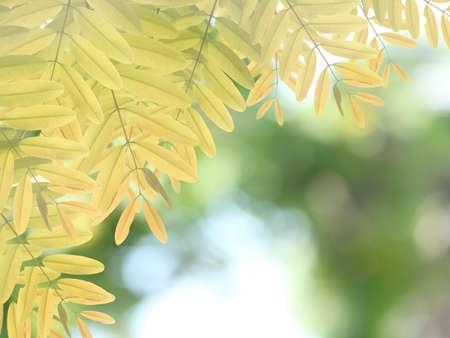 Green leaf background Stock Photo - 15150243