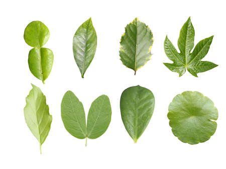 Green leave collection Stock Photo