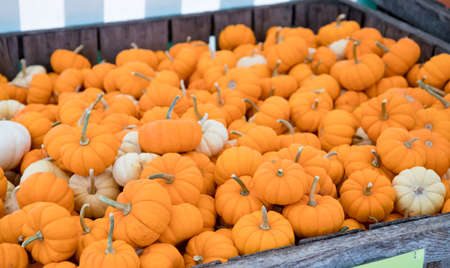 Decorative mini pumpkins for sale at an outdoor farmers market in the fall