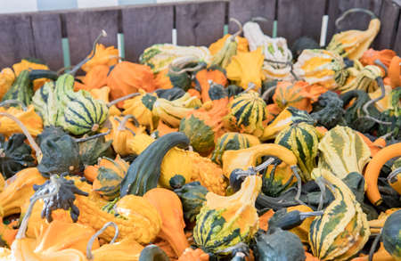 Wooden crate full of small ornamental gourds for sale at an autumn farmers maket Stock fotó