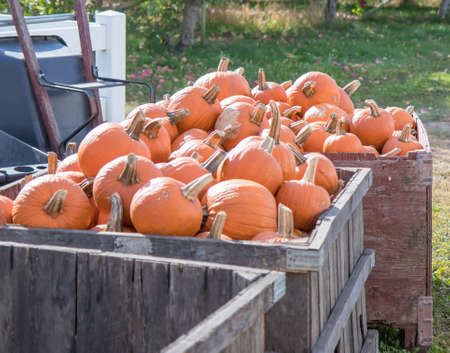 Large wooden crate of pumpkins Stock fotó