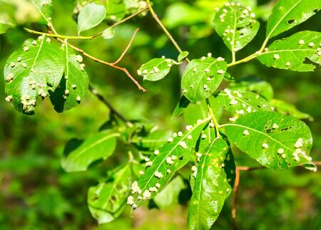 field flower: harmful insects of a garden destroy tree leaves