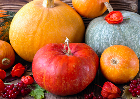 guelderrose: bright pumpkins cape gooseberry guelderrose on a brown wooden background