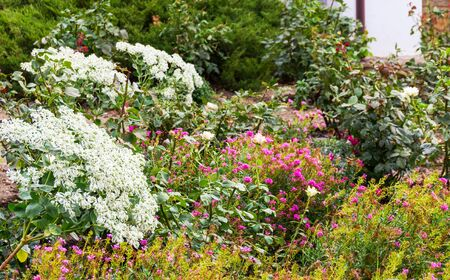 jardines con flores: garden with small white and pink flowers