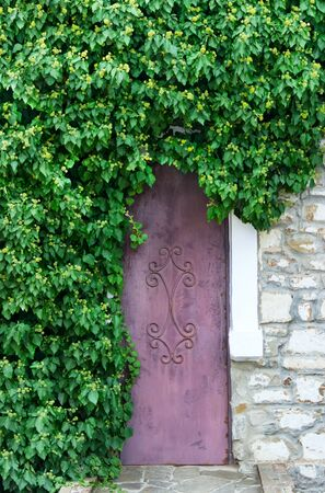 twined: old door with the growing hop against a stone wall Stock Photo