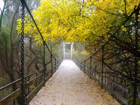 bridge in the autumn forest photo